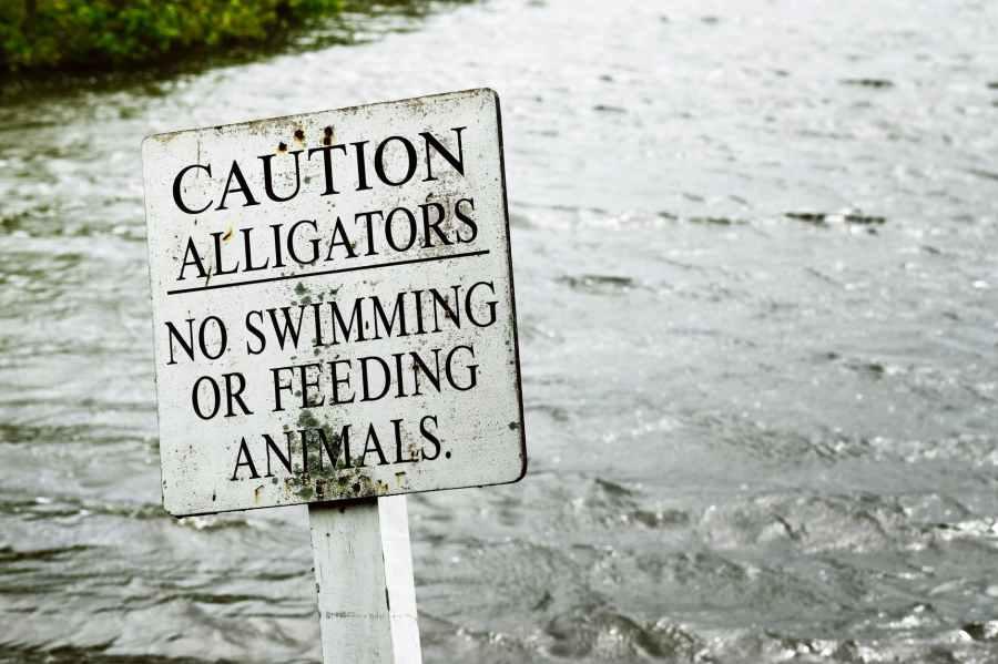 gray caution alligators label panel